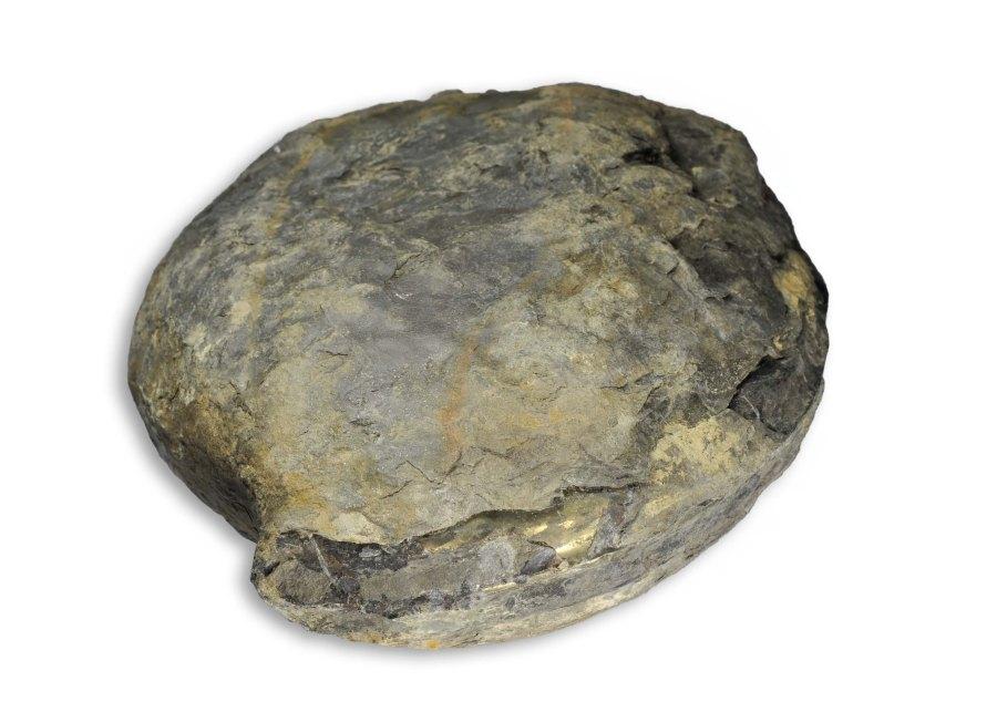 A large 20 cm nodule with a complete Hildaites sp just showing its aperture...