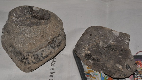 Specimen as found with section of whorls on both pieces, oolitic structure can be seen