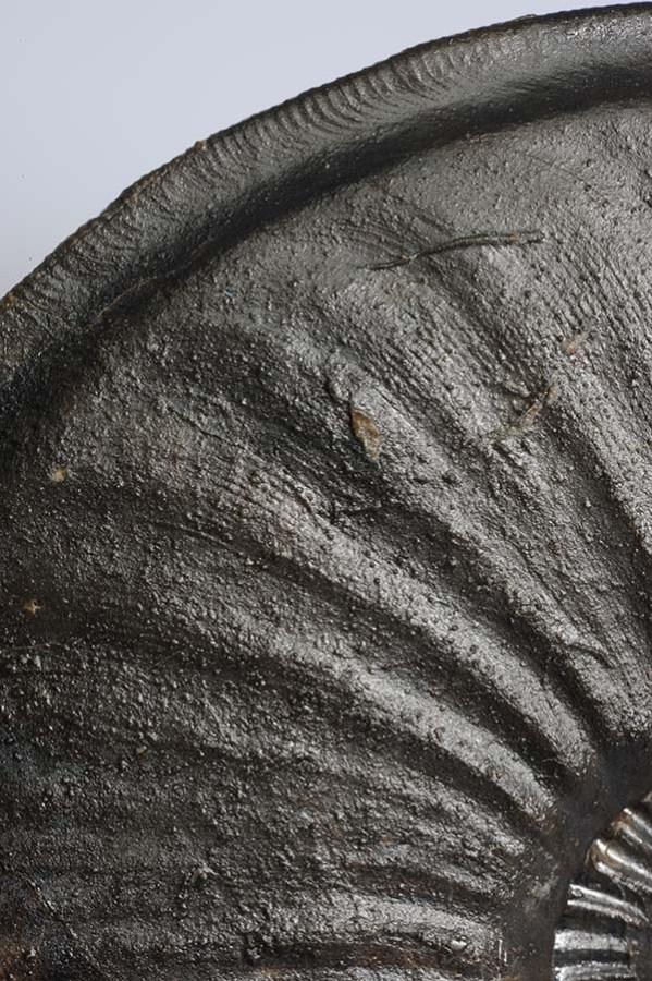 Eparietites impedens, shell detail