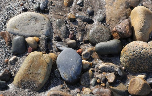 A very worn pebble with a Dactylioceras sp. on Robin Hoods Bay beach