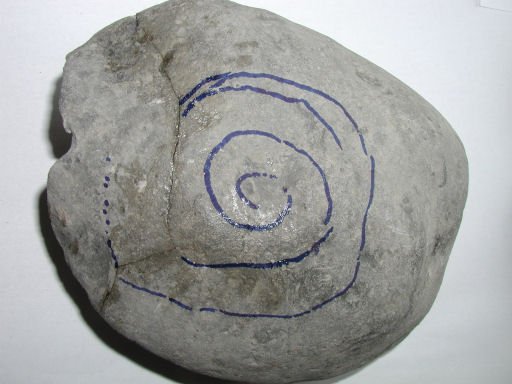 Nodule with Zugodactylites - approximate position of the ammonite marked before glueing the nodule.