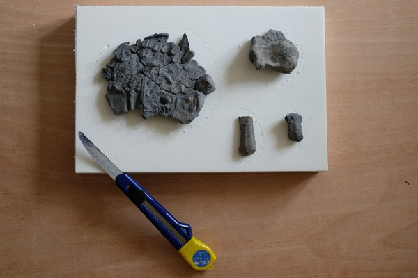 Ichthyosaur paddle bones laid out on a piece of foam for taking measure